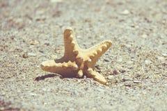 Seastar o stelle marine del mare che stanno in sabbia della spiaggia Pesce della stella su fondo con lo spazio della copia Fotografia Stock Libera da Diritti