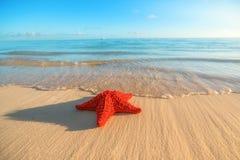 Seastar o stelle marine del mare che stanno sulla spiaggia Fotografie Stock Libere da Diritti