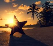 Seastar o stelle marine del mare che stanno sulla spiaggia Immagini Stock Libere da Diritti