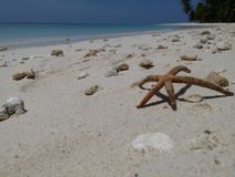 Seastar ob the beach Royalty Free Stock Photography