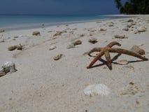Seastar ob het strand Royalty-vrije Stock Fotografie