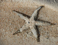Seastar op het strand Stock Afbeelding