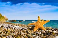 Seastar op het strand royalty-vrije stock foto