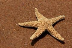 Seastar Stock Images