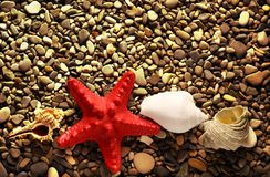 Seastar on pebbles Royalty Free Stock Image