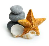 Seastar, pierres et coquillage Photographie stock