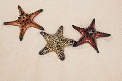Seastar in sand Stock Photos