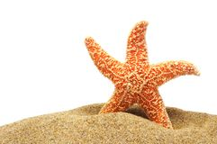 Seastar and sand bank Stock Images