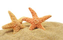 Seastar and sand bank Royalty Free Stock Images