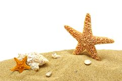 Seastar and sand bank Stock Photo