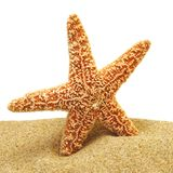 Seastar and sand bank Stock Photos