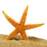 Seastar and sand bank Stock Photography