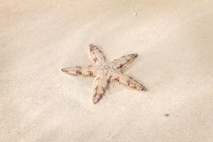 Seastar on the sand of the beach Stock Photography