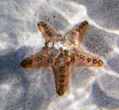 Seastar Stock Photography