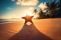 Seastar or sea starfish standing on the beach. Seastar or sea starfish standing on the beach Stock Image