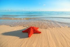 Seastar or sea starfish standing on the beach. Seastar or sea starfish standing on the beach Royalty Free Stock Photos