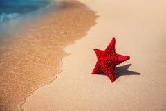Seastar or sea starfish standing on the beach. Stock Photo