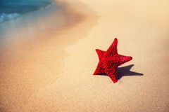 Seastar or sea starfish standing on the beach. Royalty Free Stock Photo