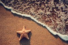 Seastar or sea starfish standing on the beach and ocean waves Stock Images