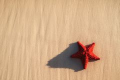 Seastar or sea starfish standing on the beach. Seastar or sea starfish standing on the beach Royalty Free Stock Photography