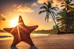 Seastar or sea starfish standing on the beach. Stock Photography