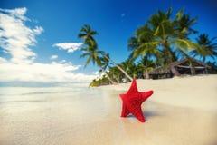 Seastar or sea starfish standing on the island Stock Photo