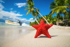 Seastar or sea starfish standing on the island. Seastar or sea starfish standing on the beach of island Stock Photo