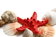Seastar and seashells Stock Image