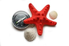 Seastar and seashells Royalty Free Stock Image