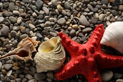 Seastar and seashells Stock Images