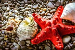 Seastar and seashells on pebbles Stock Images