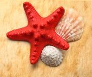 Seastar and seashells Royalty Free Stock Photography