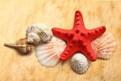 Seastar and seashells Stock Photo