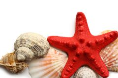 Seastar and seashells Royalty Free Stock Photos