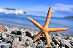 Seastar in the seashore Royalty Free Stock Images