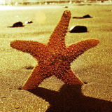 Seastar in the seashore with a retro effect Stock Photography