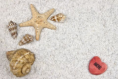 Seastar and shells Stock Photography