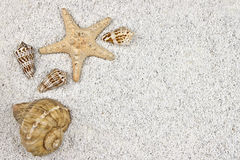 Seastar and shells Royalty Free Stock Image
