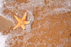 Seastar on the shore of a beach at sunset from Stock Photography