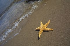 Seastar sitting in ocean. With a wave behind Stock Photos