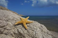 Seastar sitting on a rock. With ocean behind Stock Image