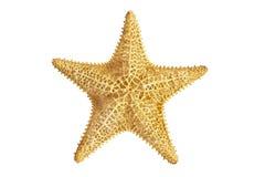 Seastar sjöstjärna Arkivfoto