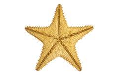 Seastar sjöstjärnabaksida Arkivfoton