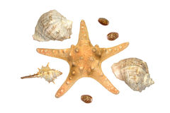 Seastar and some shells isolated over white. Starfish and some shells isolated over white Royalty Free Stock Photos