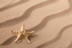 Seastar or starfish on rippled beach sand stock photo