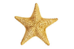 Seastar starfish Stock Photo