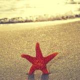 Seastar sulla riva di una spiaggia Immagini Stock Libere da Diritti