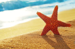 Seastar sulla sabbia di una spiaggia Fotografia Stock Libera da Diritti
