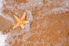 Seastar sur le rivage d'une plage au coucher du soleil de Photographie stock