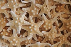 Seastar texture (starfish background) Royalty Free Stock Photos